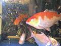 様々な種類の魚が混泳している水槽